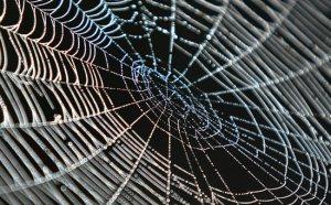 tela-del-ragno